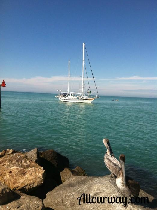 Pelicans, fishermen, south jetty, prey