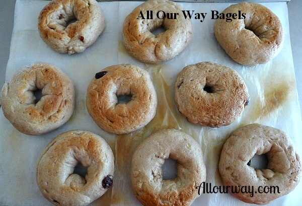 Nine homemade Bagels on a parchment lined cookie sheet ready for Oven