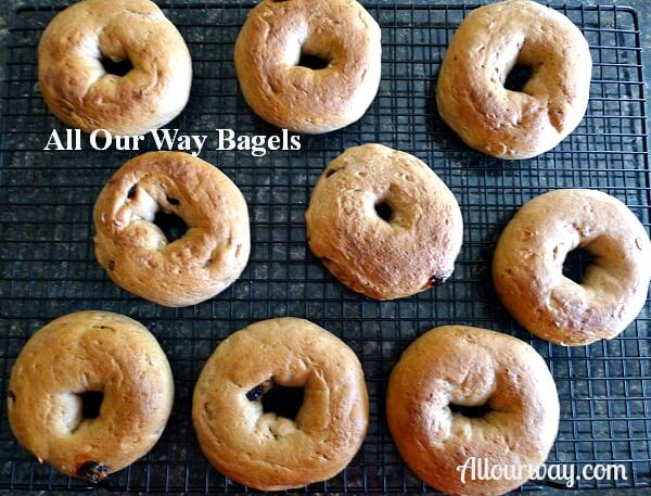 Homemade bagels are nicely browned and on a black wire cooling, rack