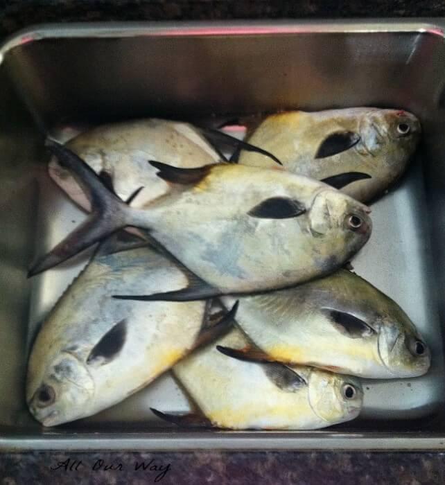 Pompano and Permit caught at Boca Grande @allourway.com