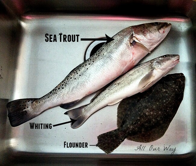 Sea Trout for the quick Spicy Baked Sea Trout Recipe @allourway.com