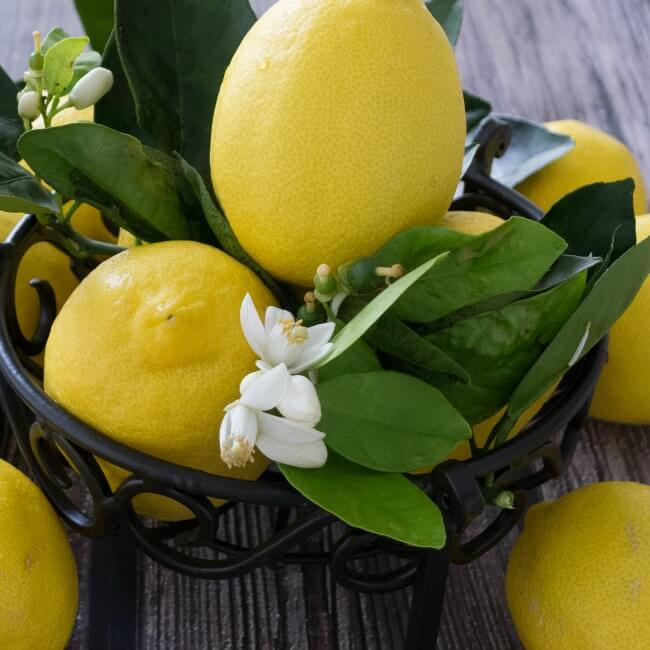 Lemon for the Fennel Orange Salad Vinaigrette @allourway.com