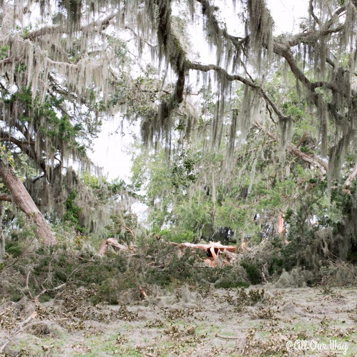 Life after a hurricane means there is work to be done. @allourway.com