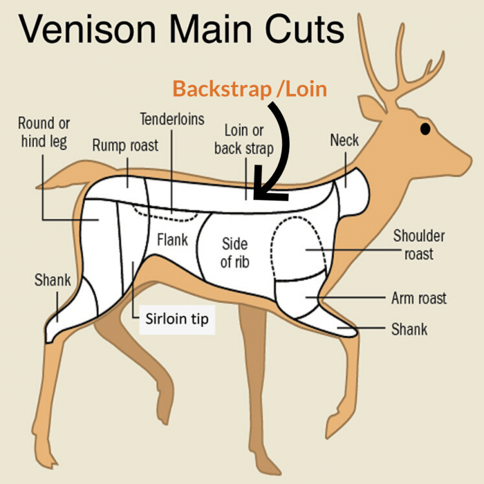 Venison Main Cuts Chart Showing Backstrap