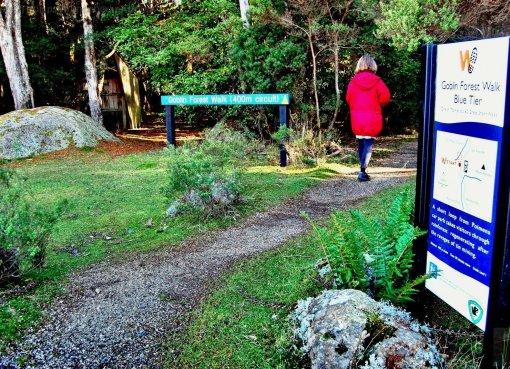 Goblin Forest Walk Blue Tier.001 11h07m20s2019 06 07 JPG