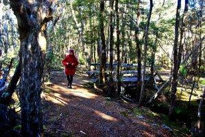 Goblin Forest Walk Blue Tier.023 11h18m11s2019 06 07 JPG