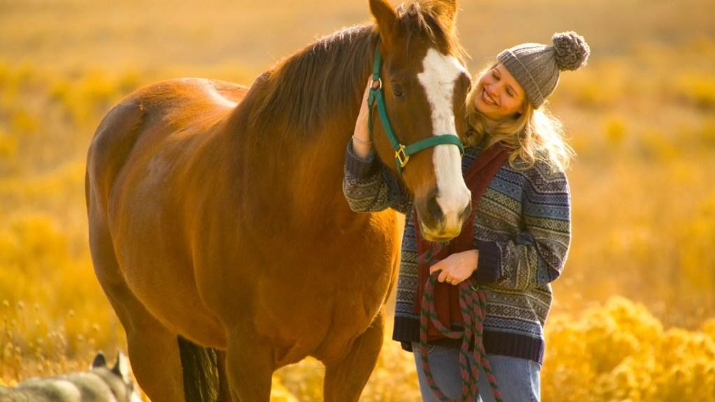 best horses for beginners