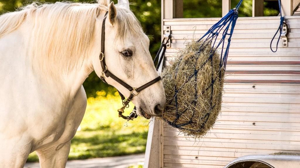 Best Horse Feeder