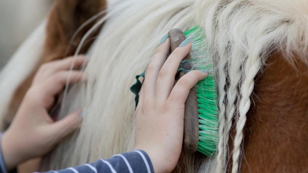 best grooming kit for horse