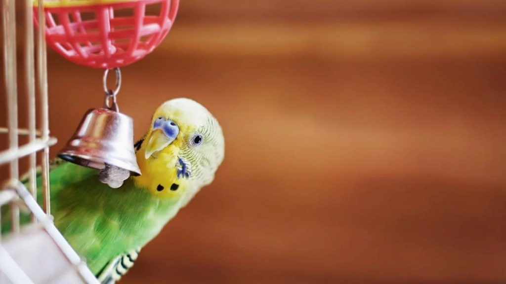 Foraging toys for birds