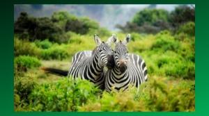 pickleball safari