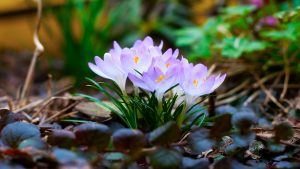 Attachment for Full HD Nature Wallpaper 1080p for Desktop with Spring flower
