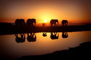 20 High Resolution Elephant Pictures No 8 - Elephant Herd in Sunset