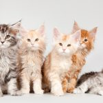 Best Cute Kitten Wallpaper No 3