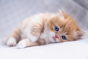 Best Cute Kitten Wallpaper No 5