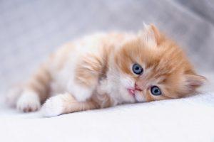 Best Cute Kitten Wallpaper No 5