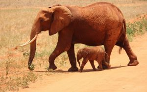 20 High Resolution Elephant Pictures No 6 - Baby Elephant with Mom