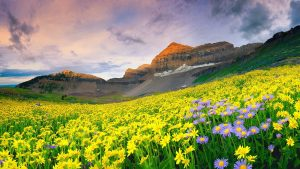 Attachment picture of 10 Best Nature Images HD in India - 3 Valley of Flowers National Park