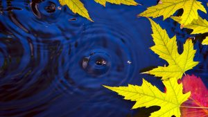 Autumn Leaves On Water Live Wallpaper