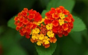 Attachment for Nature Wallpaper with Colorful Flower in Macro Photo Style