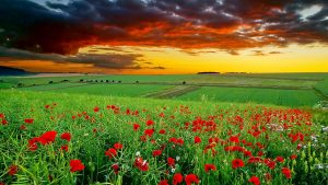Full HD Nature Wallpapers 1080p Desktop Green Landscape with Flower