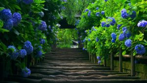 Beautiful Nature HD wallpaper of Green Trees with Blue Flowers