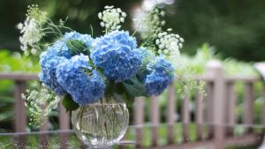 Picture Of Hydrangea Flower on Vase