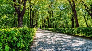Beautiful Nature Wallpaper Big Size #19 with Royal Baths Park in Warsaw