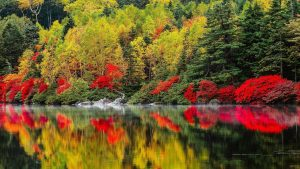 Download file for high resolution nature pictures with Colorful Nature Trees Autumn Season and Lakes Reflections