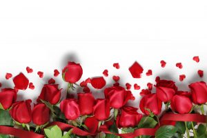 Pictures Of Red Roses with White Background