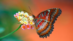 Close Up Picture of Butterfly on Flower