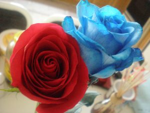 Top 25 Pictures Of Red Roses - #07 - Blue Roses