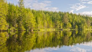 Nature Images HD 1080p with Picture of Reflecting Forest On River