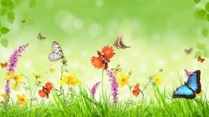 Images of Nature in 3D with Butterflies and Flowers in Morning
