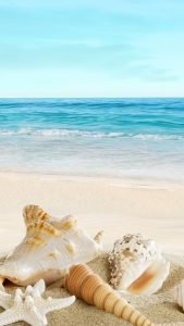 Beach Wallpaper for iPhone 7 and iPhone 8 - 10 - Nature Sunny Seaside Beach