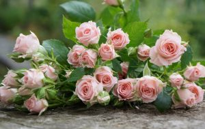 4K Picture of Pale Colored Roses