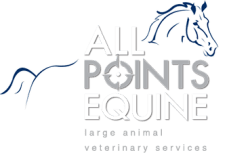 All Points Equine Dog Chiropractic