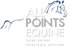 All Points Equine Horse Chiropractic