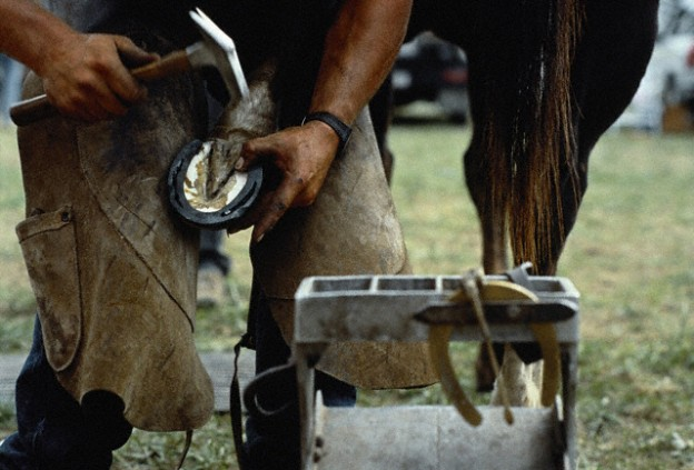 The common saying NO HOOF, NO HORSE is very true!
