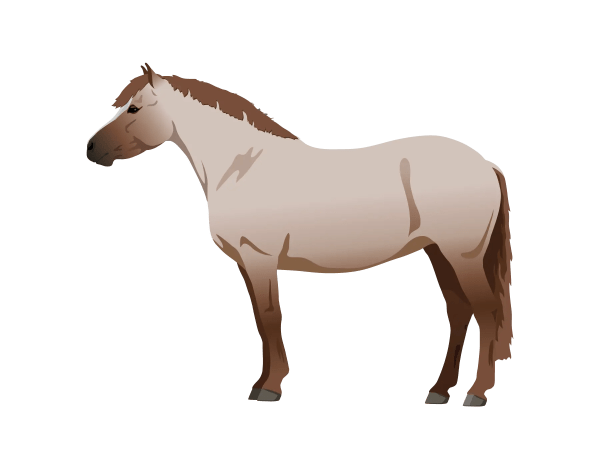 Red Roan