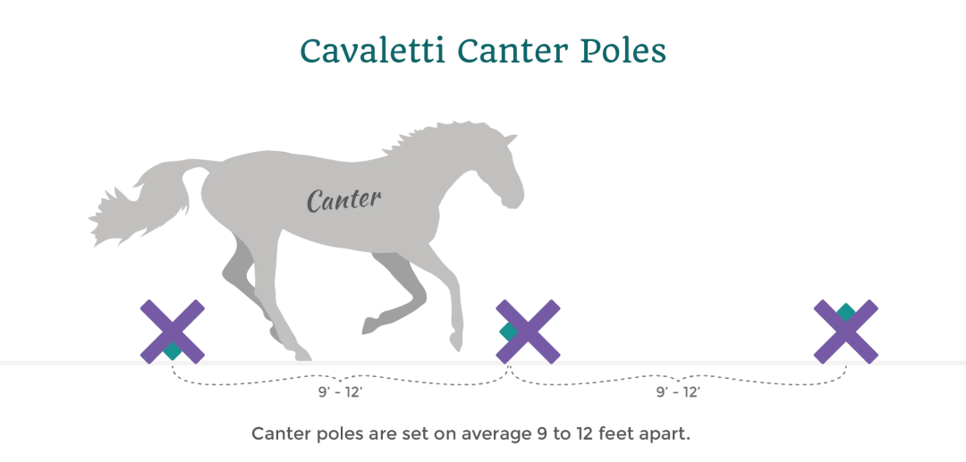 cavaletti horse canter poles distance infoagraphic