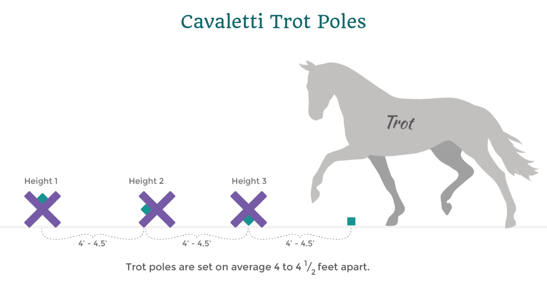 cavaletti horse trot poles distance infoagraphic