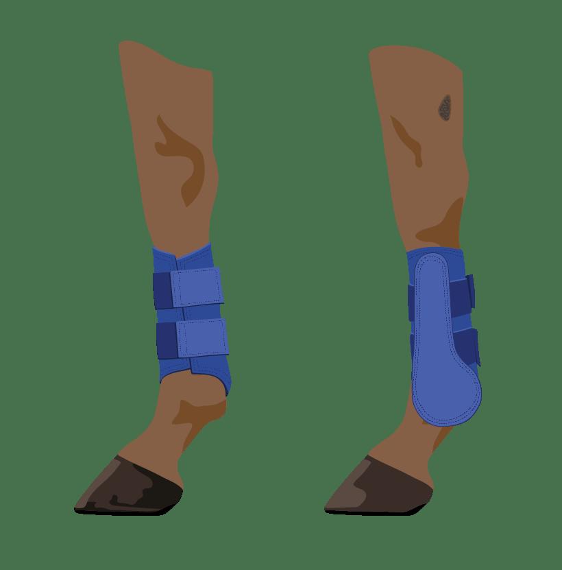 Horse Legs Galloping Boots illustration