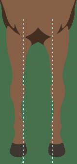 Horse front leg conformation base narrow