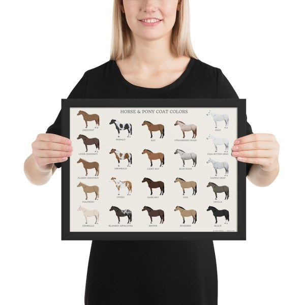 Horse Pony Coat Colors framed poster