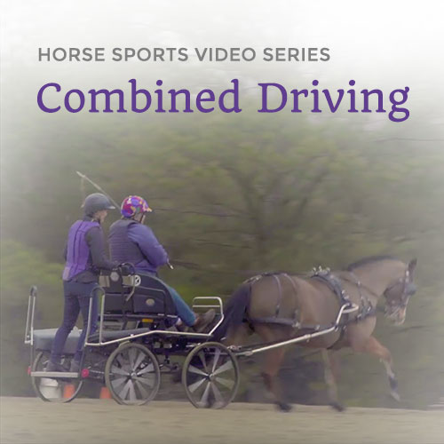 Allpony Horse Sports Video Series: Combined Driving