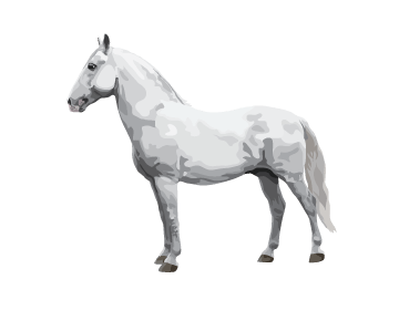 Lipizzan horse illustration