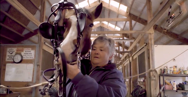 Allpony interview combined driving horse instructor tacking up