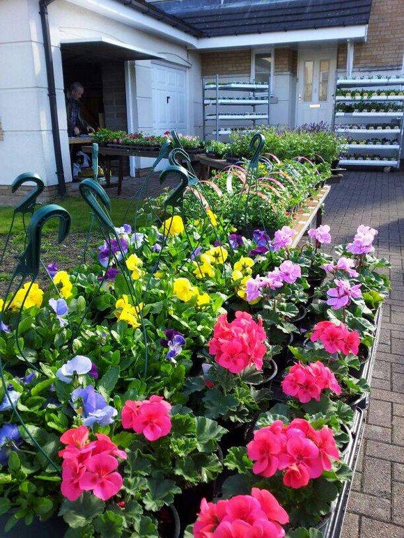 Plants on sale