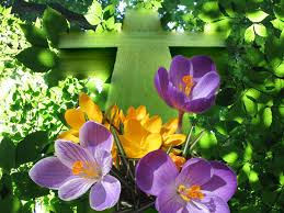 cross crocuses